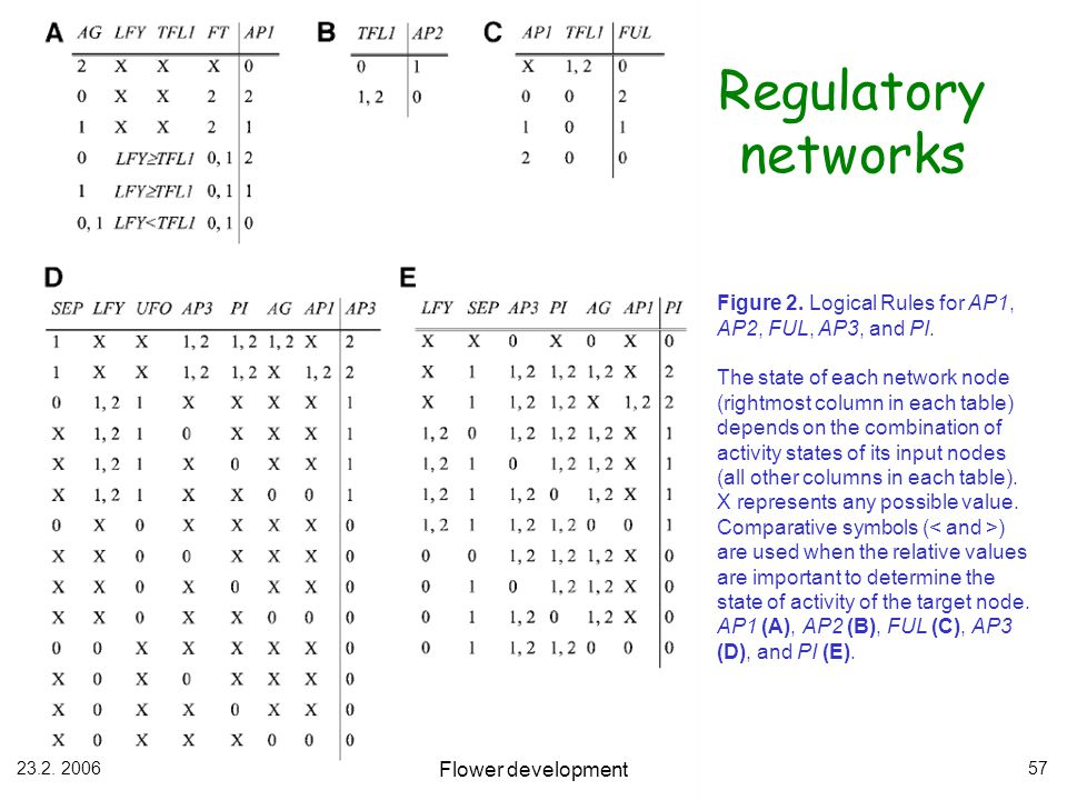 23.2. 2006 Flower development 57 Regulatory networks Figure 2. Logical Rules for AP1, AP2, FUL, AP3, and PI. The state of each network node (rightmost