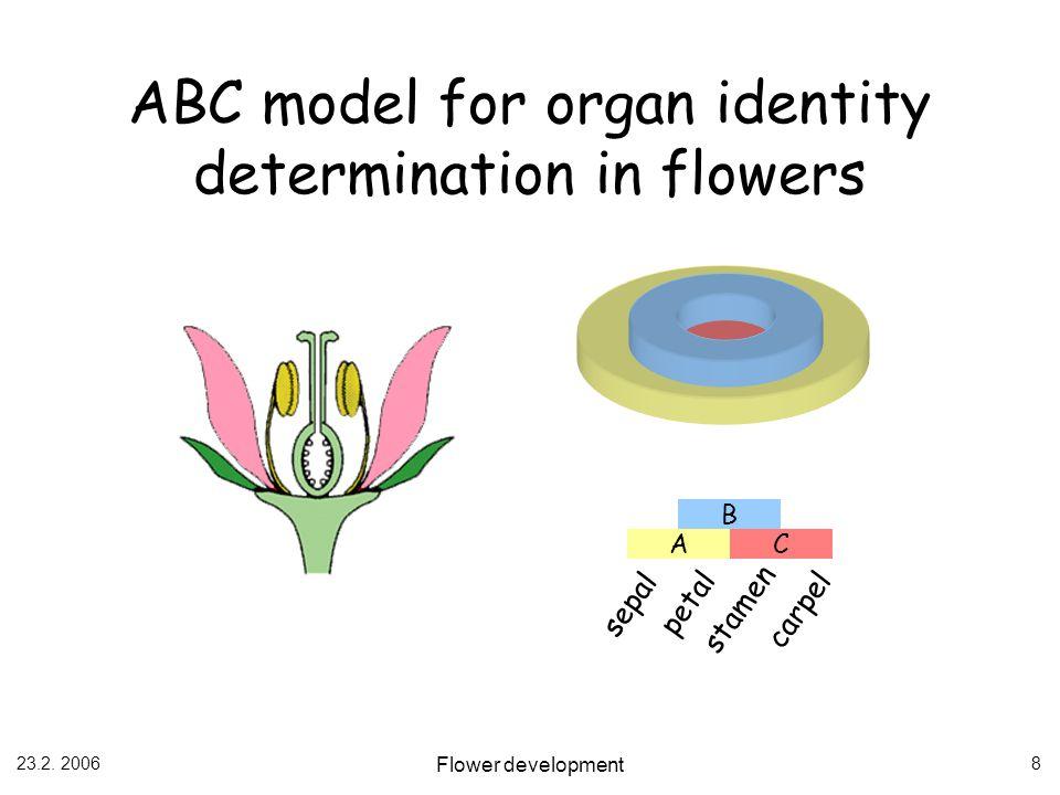 23.2. 2006 Flower development 8 B AC sepal petal stamen carpel ABC model for organ identity determination in flowers