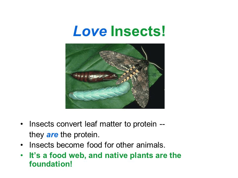 Love Insects. Insects convert leaf matter to protein -- they are the protein.