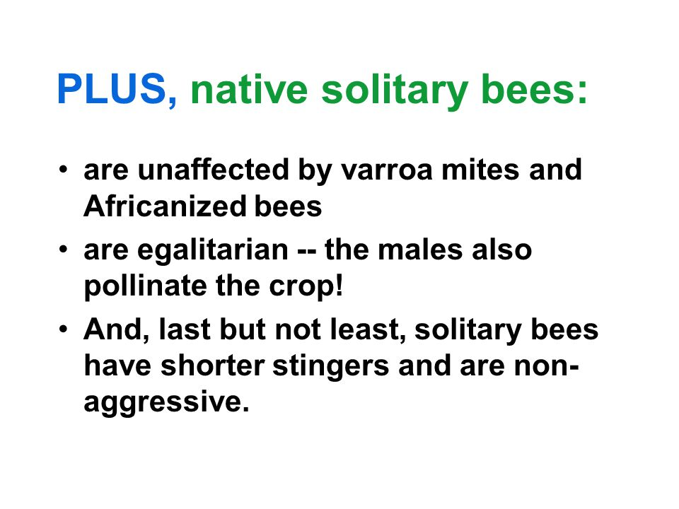 PLUS, native solitary bees: are unaffected by varroa mites and Africanized bees are egalitarian -- the males also pollinate the crop.