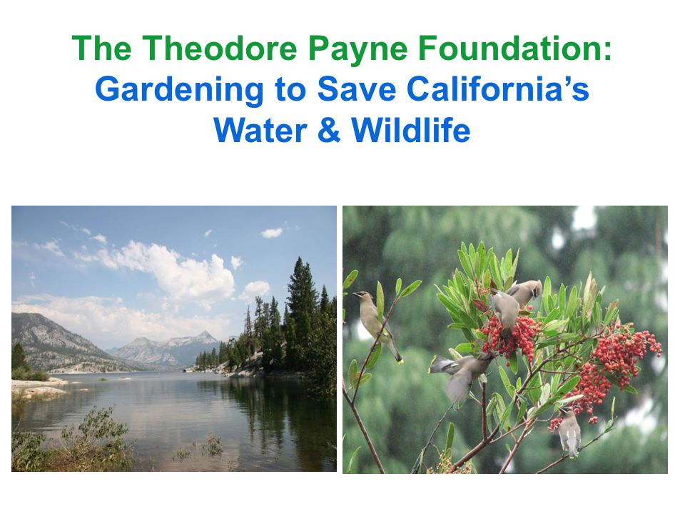 The Theodore Payne Foundation: Gardening to Save Californias Water & Wildlife