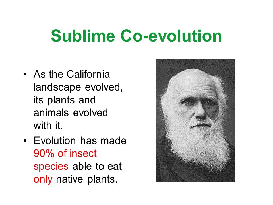 Sublime Co-evolution As the California landscape evolved, its plants and animals evolved with it.