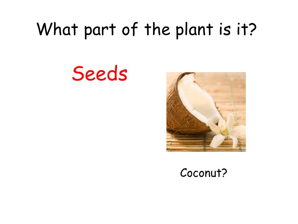 What part of the plant is it? Seeds Coconut?