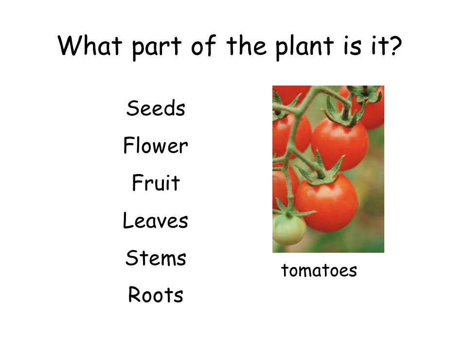 What part of the plant is it? Seeds Flower Fruit Leaves Stems Roots tomatoes