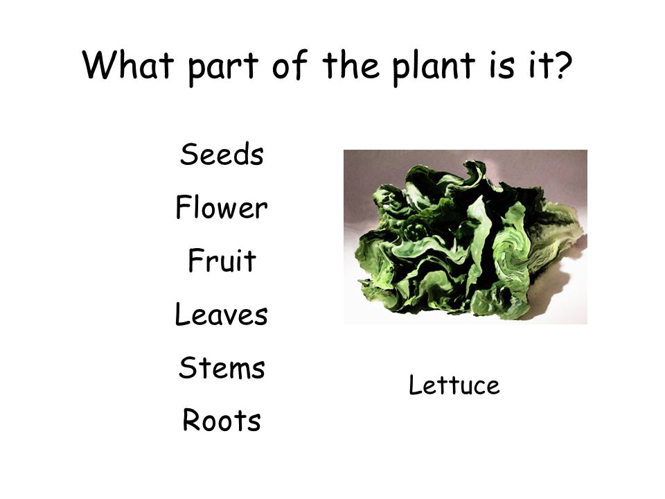What part of the plant is it? Seeds Flower Fruit Leaves Stems Roots Lettuce