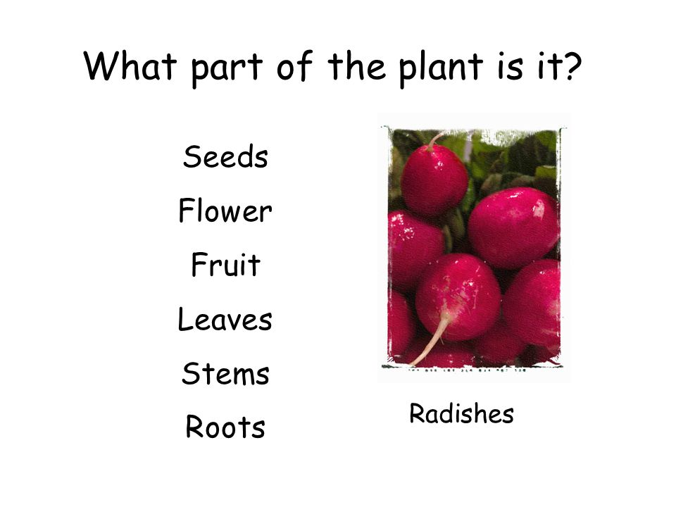 What part of the plant is it? Seeds Flower Fruit Leaves Stems Roots Radishes
