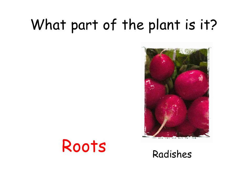 What part of the plant is it? Roots Radishes