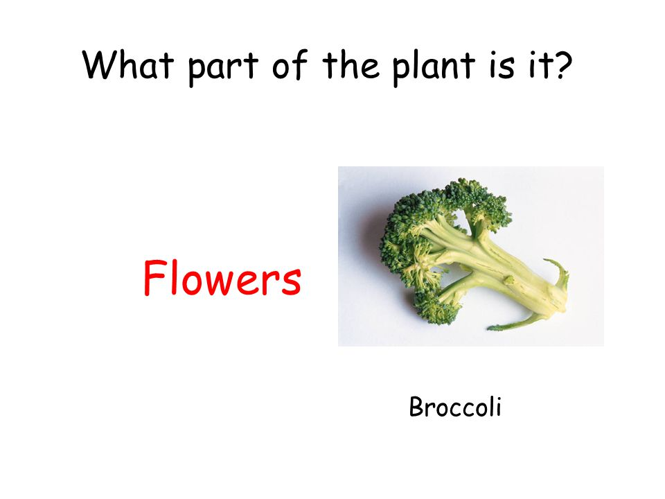 What part of the plant is it? Flowers Broccoli