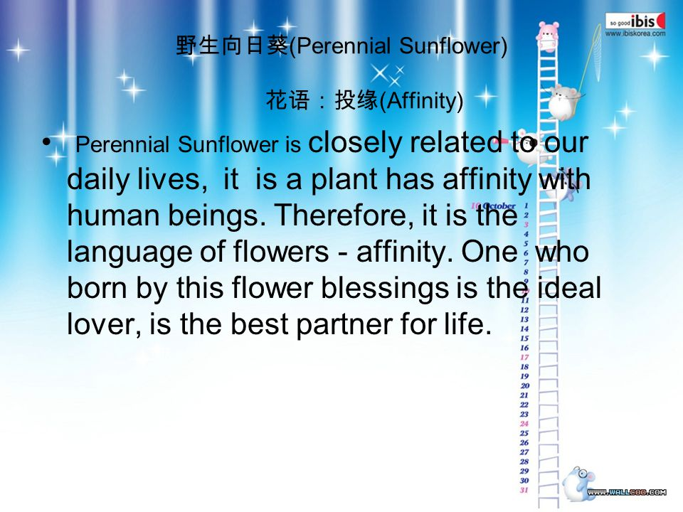 (Perennial Sunflower) (Affinity) Perennial Sunflower is closely related to our daily lives, it is a plant has affinity with human beings.