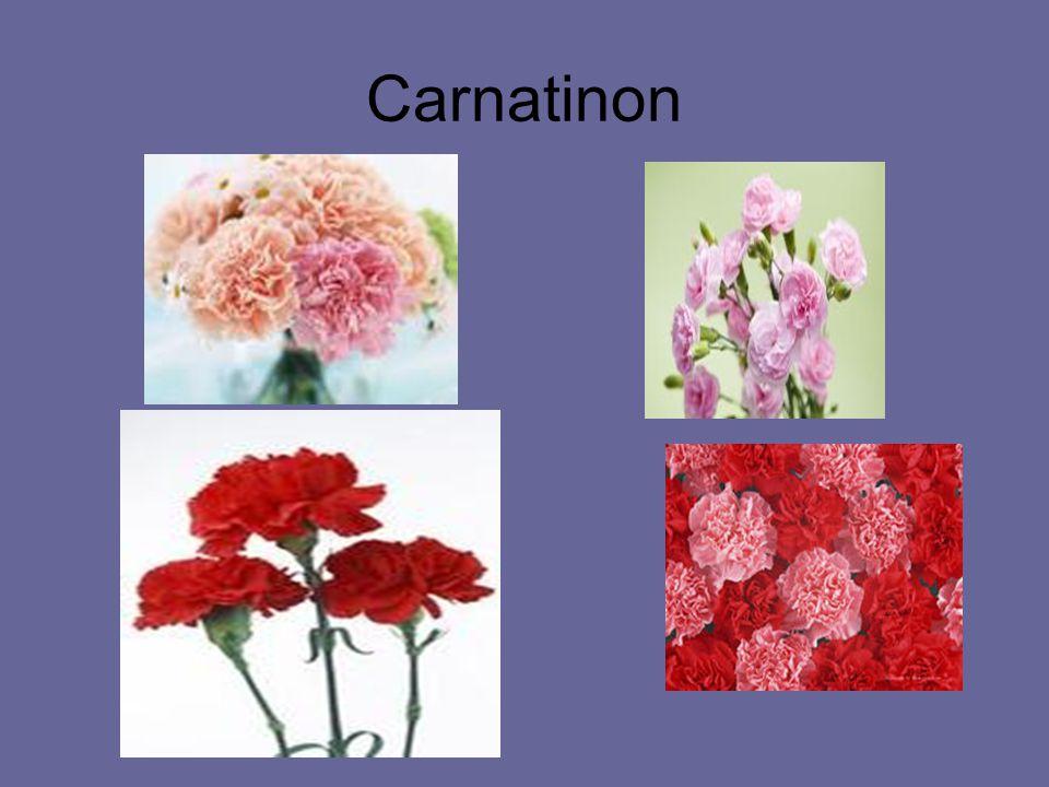 Carnatinon