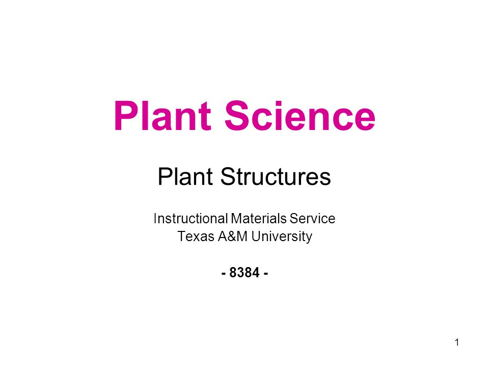 2 Plant Structures Parts of a Vascular Plant Root Structure Stem Structure (External) Leaf Structure Parts of a Complete Flower