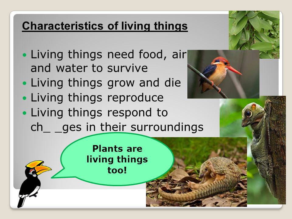Characteristics of living things Living things need food, air and water to survive Living things grow and die Living things reproduce Living things respond to ch_ _ges in their surroundings Plants are living things too!