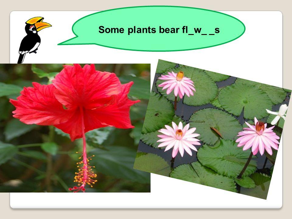 Some plants bear fl_w_ _s