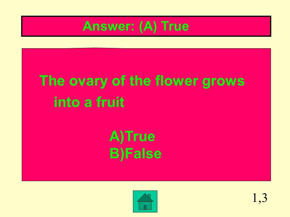 1,3 Answer: (A) True The ovary of the flower grows into a fruit A)True B)False