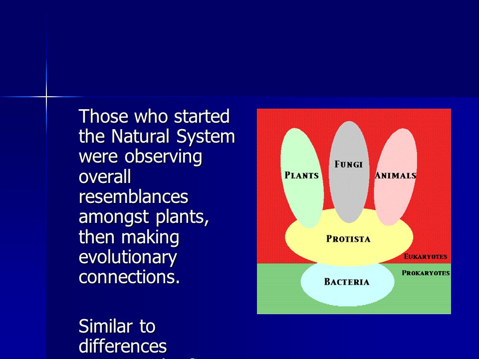 Those who started the Natural System were observing overall resemblances amongst plants, then making evolutionary connections. Similar to differences