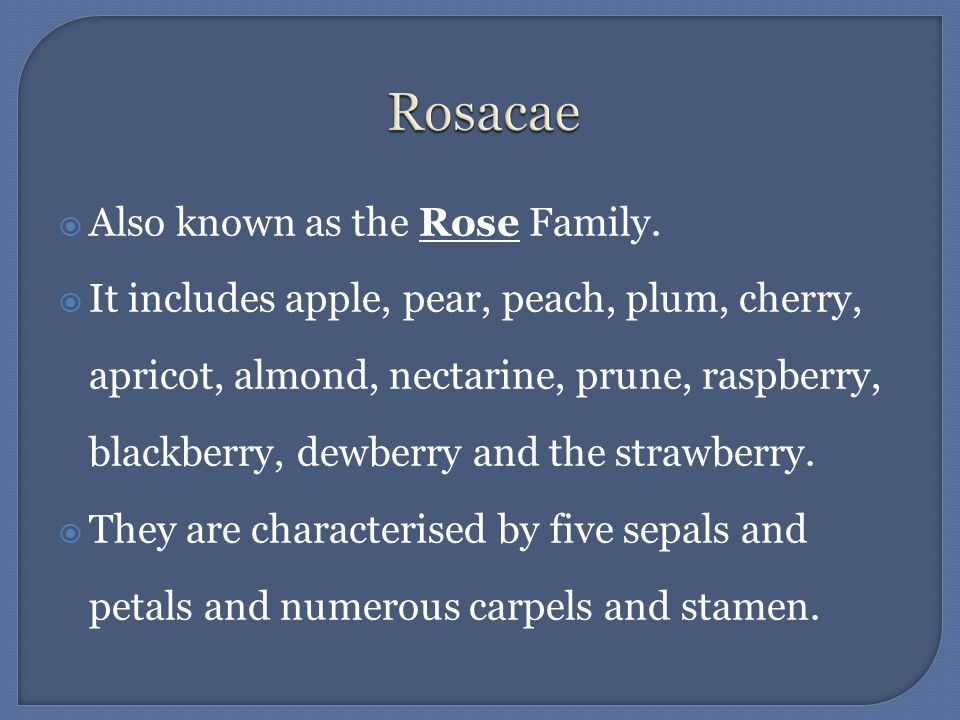 Also known as the Rose Family. It includes apple, pear, peach, plum, cherry, apricot, almond, nectarine, prune, raspberry, blackberry, dewberry and th