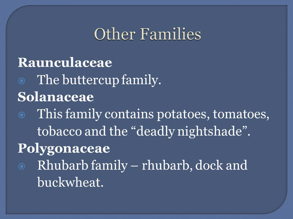 Raunculaceae The buttercup family. Solanaceae This family contains potatoes, tomatoes, tobacco and the deadly nightshade. Polygonaceae Rhubarb family