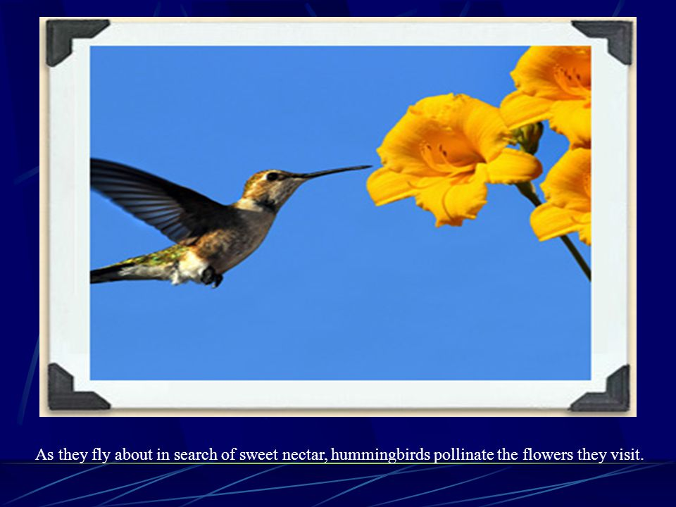Birds Pollinated Flowers. Some birds, especially hummingbirds, pollinate plants. The plants that attract birds are generally brightly coloured, with r