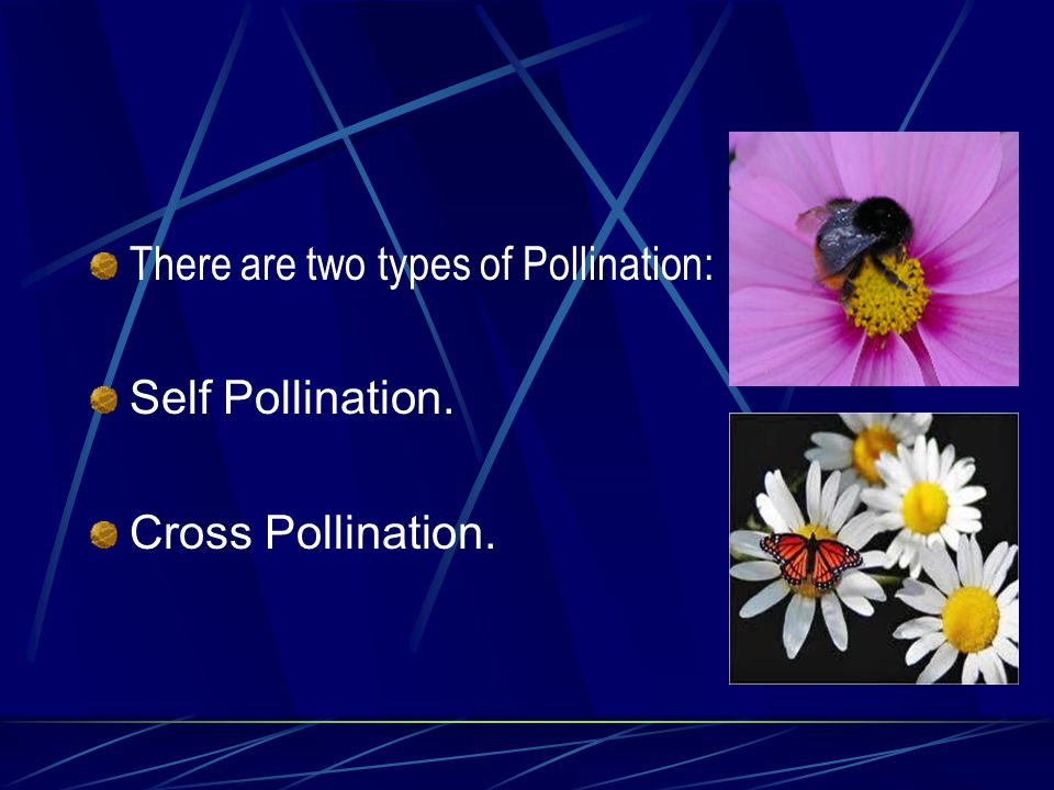 Sr no.Insect Pollinated FlowersWind Pollinated Flowers 4.