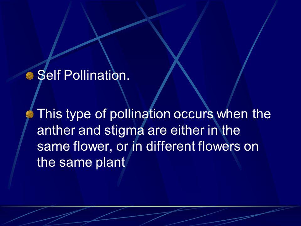 Self Pollination.