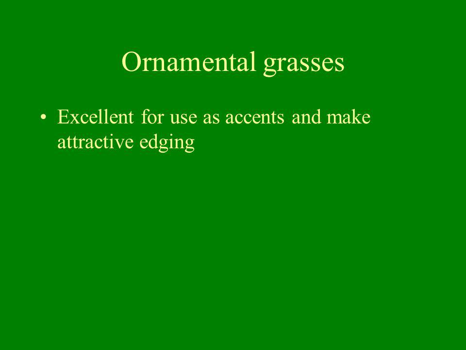 Ornamental grasses Excellent for use as accents and make attractive edging