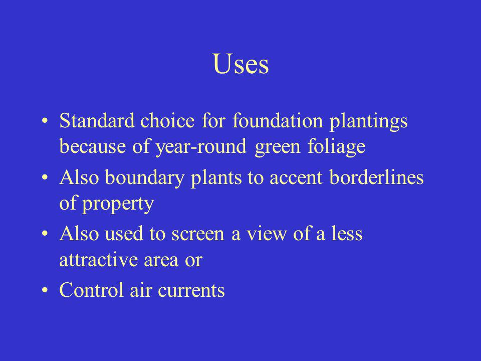 Uses Standard choice for foundation plantings because of year-round green foliage Also boundary plants to accent borderlines of property Also used to