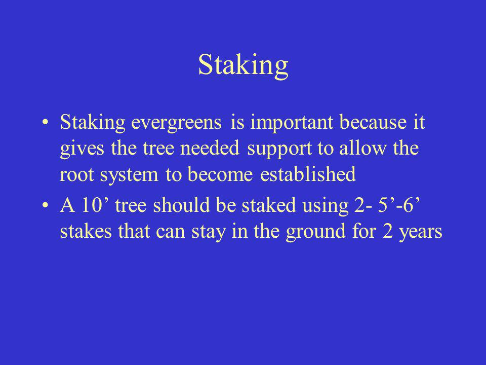 Staking Staking evergreens is important because it gives the tree needed support to allow the root system to become established A 10 tree should be st