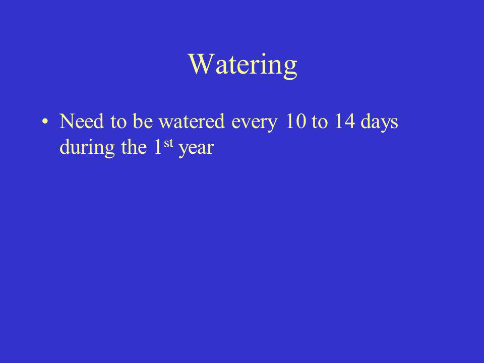 Watering Need to be watered every 10 to 14 days during the 1 st year