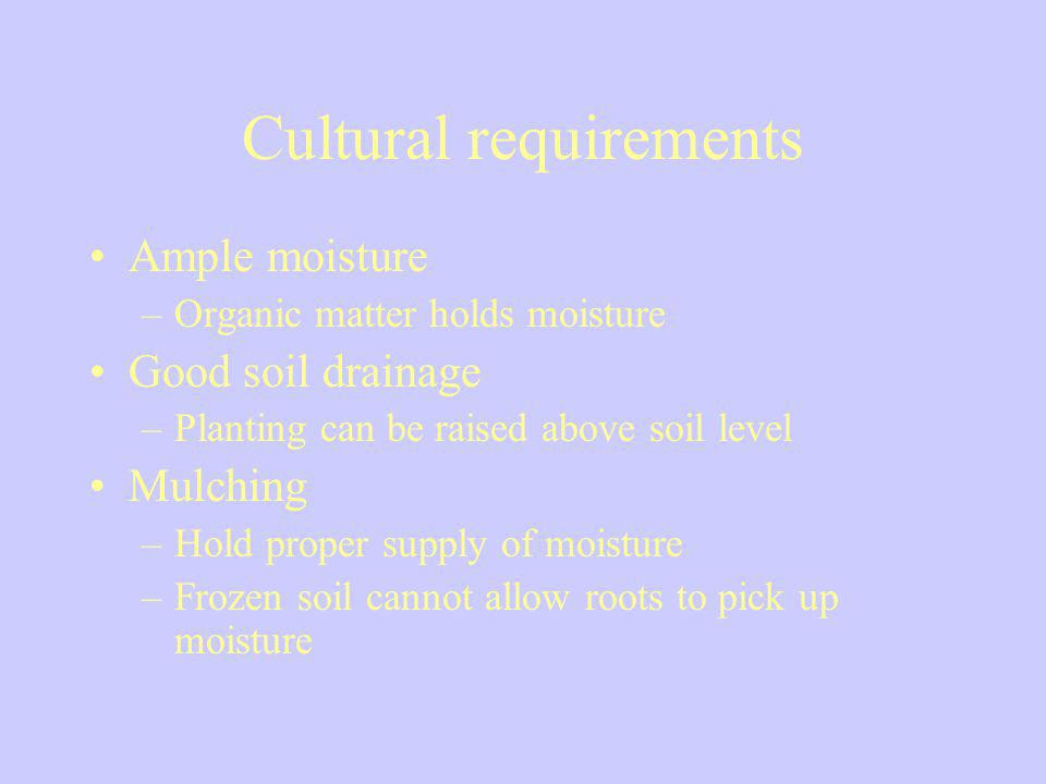 Cultural requirements Ample moisture –Organic matter holds moisture Good soil drainage –Planting can be raised above soil level Mulching –Hold proper