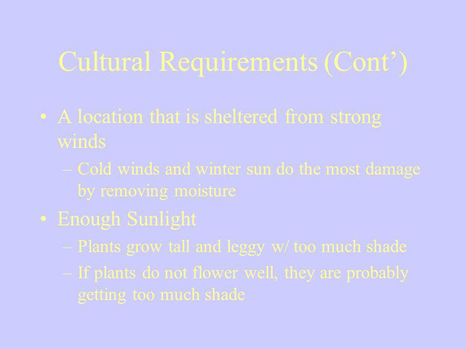 Cultural Requirements (Cont) A location that is sheltered from strong winds –Cold winds and winter sun do the most damage by removing moisture Enough