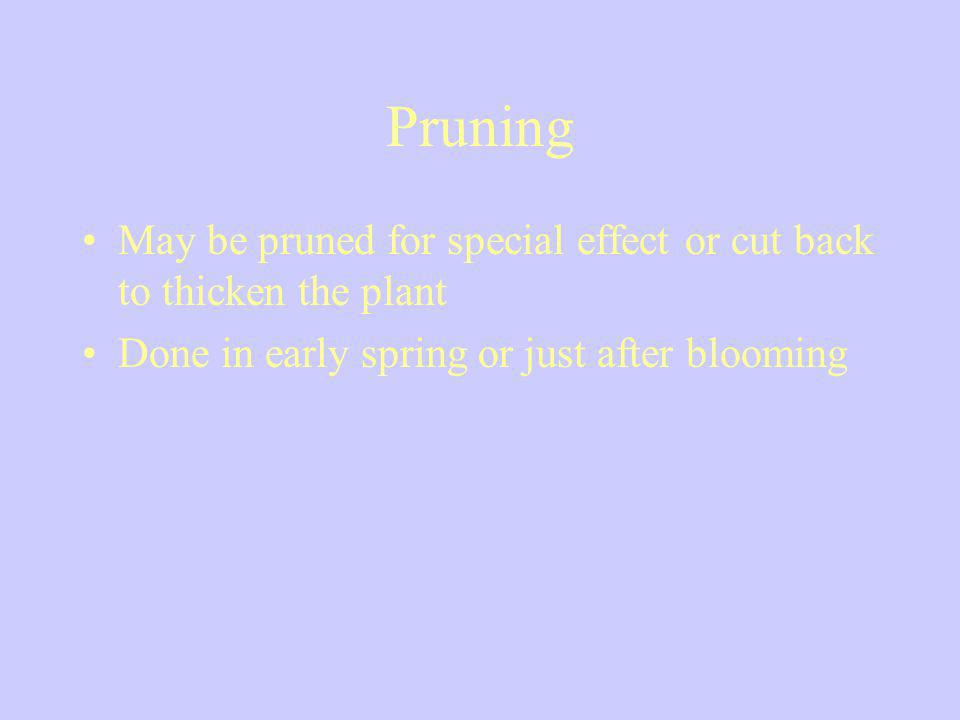 Pruning May be pruned for special effect or cut back to thicken the plant Done in early spring or just after blooming