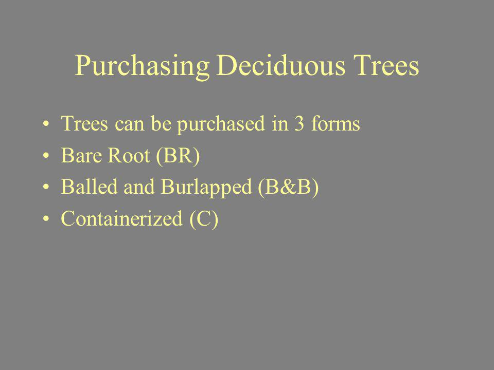 Purchasing Deciduous Trees Trees can be purchased in 3 forms Bare Root (BR) Balled and Burlapped (B&B) Containerized (C)