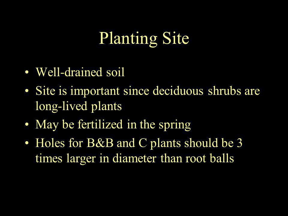 Planting Site Well-drained soil Site is important since deciduous shrubs are long-lived plants May be fertilized in the spring Holes for B&B and C pla