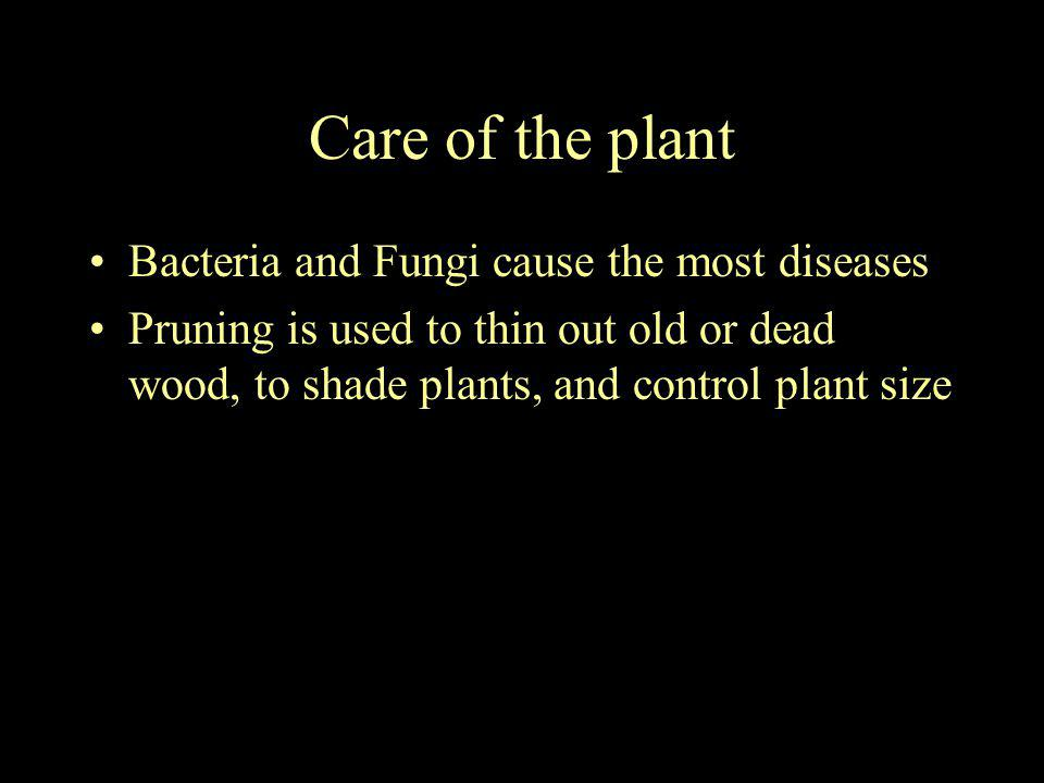 Care of the plant Bacteria and Fungi cause the most diseases Pruning is used to thin out old or dead wood, to shade plants, and control plant size