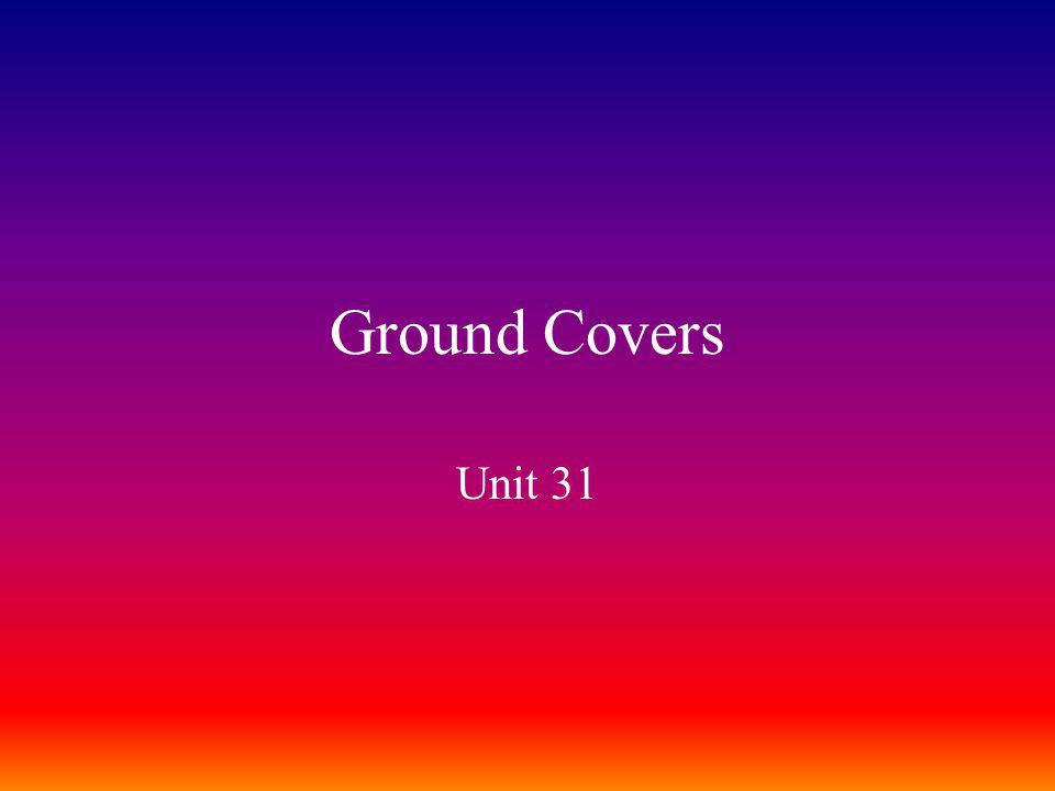 Ground Covers Unit 31