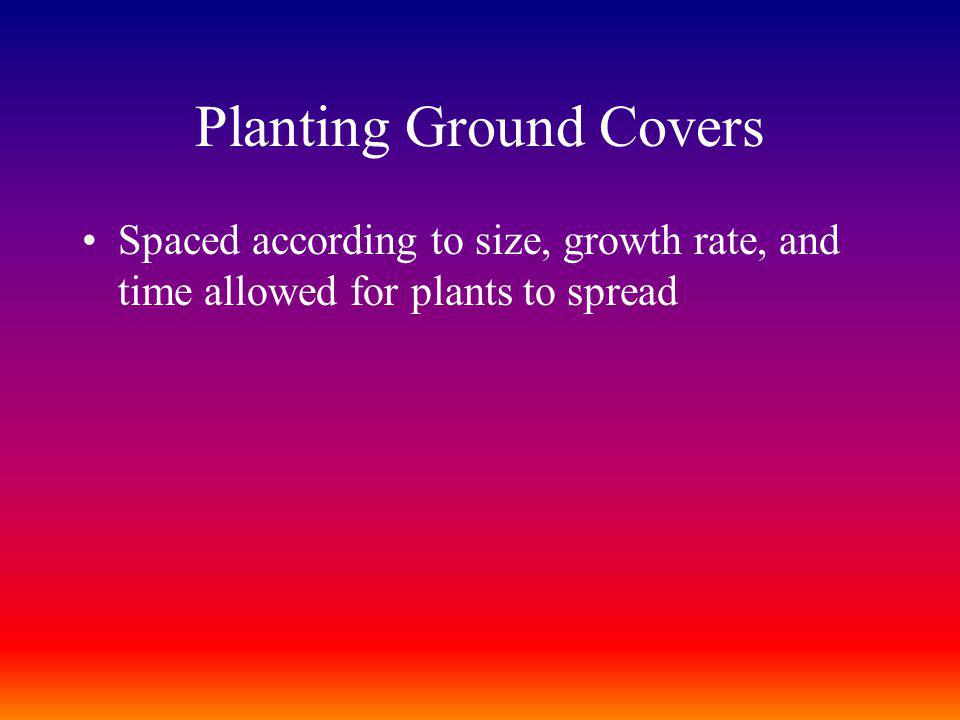 Planting Ground Covers Spaced according to size, growth rate, and time allowed for plants to spread