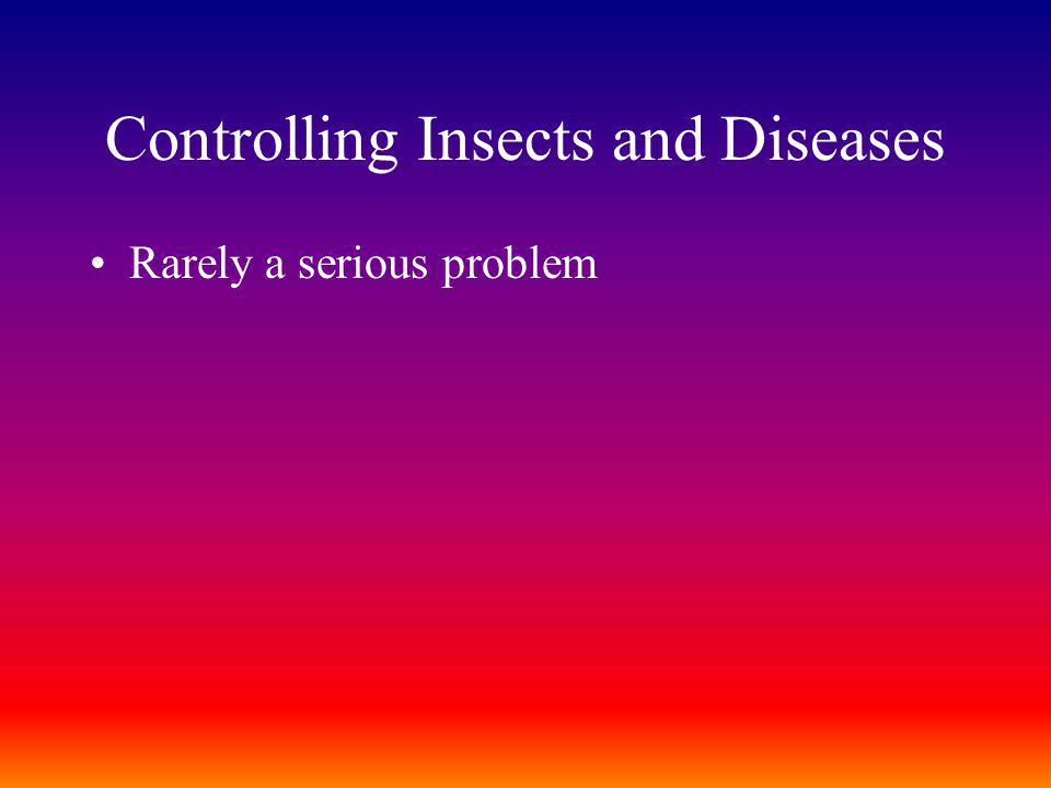 Controlling Insects and Diseases Rarely a serious problem