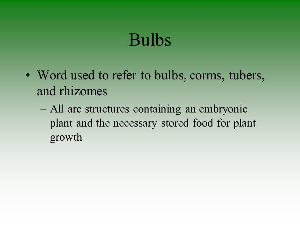 Bulbs Word used to refer to bulbs, corms, tubers, and rhizomes –All are structures containing an embryonic plant and the necessary stored food for pla