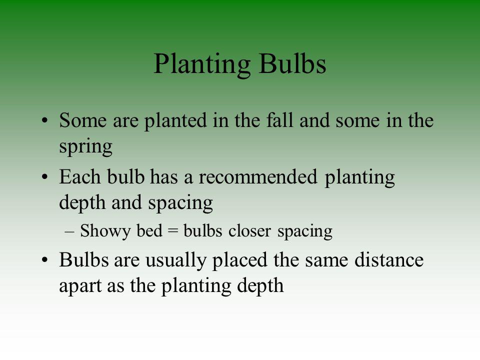 Planting Bulbs Some are planted in the fall and some in the spring Each bulb has a recommended planting depth and spacing –Showy bed = bulbs closer sp