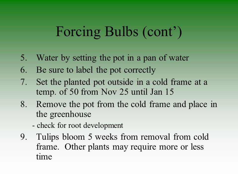 Forcing Bulbs (cont) 5.Water by setting the pot in a pan of water 6.Be sure to label the pot correctly 7.Set the planted pot outside in a cold frame a