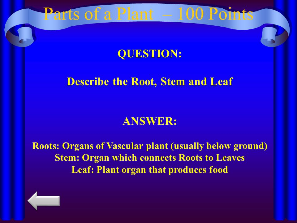 Parts of a Plant – 100 Points QUESTION: Describe the Root, Stem and Leaf ANSWER: Roots: Organs of Vascular plant (usually below ground) Stem: Organ which connects Roots to Leaves Leaf: Plant organ that produces food
