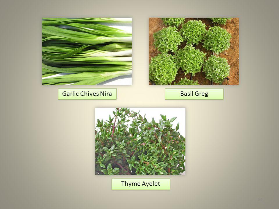 54 Basil Greg Garlic Chives Nira Thyme Ayelet