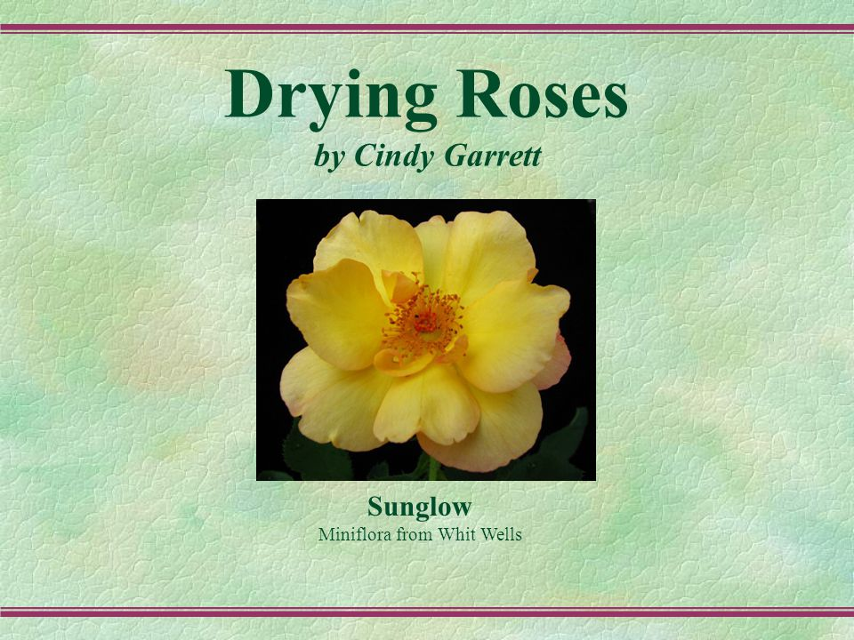 Drying Roses Commonly used methods: Microwave Air Drying