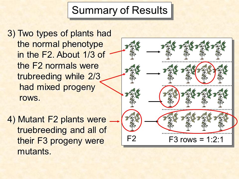 Summary of Results 3) Two types of plants had the normal phenotype the normal phenotype in the F2.