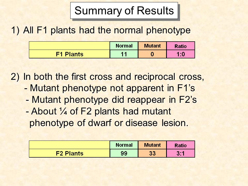 Summary of Results 1)All F1 plants had the normal phenotype 2)In both the first cross and reciprocal cross, - Mutant phenotype not apparent in F1s - Mutant phenotype not apparent in F1s - Mutant phenotype did reappear in F2s - Mutant phenotype did reappear in F2s - About ¼ of F2 plants had mutant - About ¼ of F2 plants had mutant phenotype of dwarf or disease lesion.