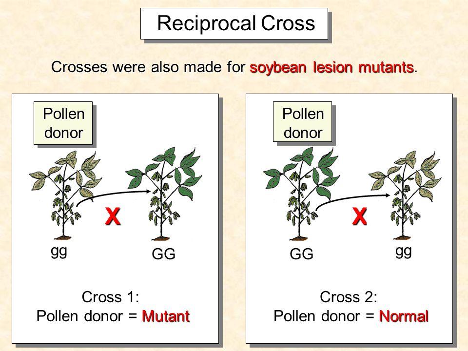 Why do a reciprocal cross.