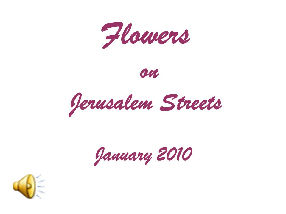 Flowers on Jerusalem Streets January 2010