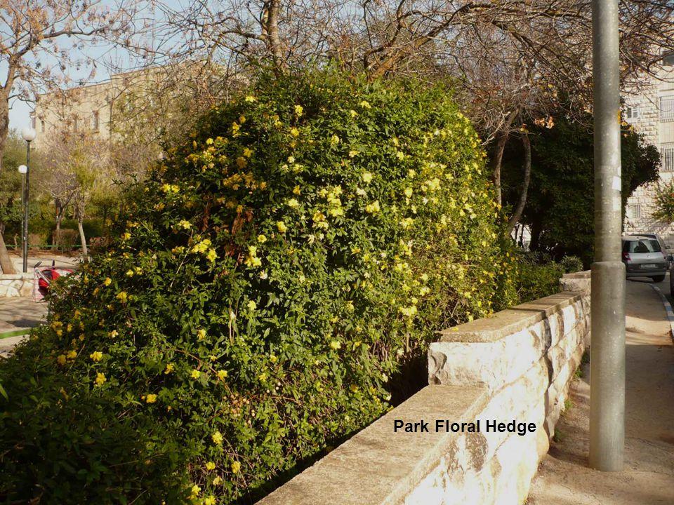 Park Floral Hedge