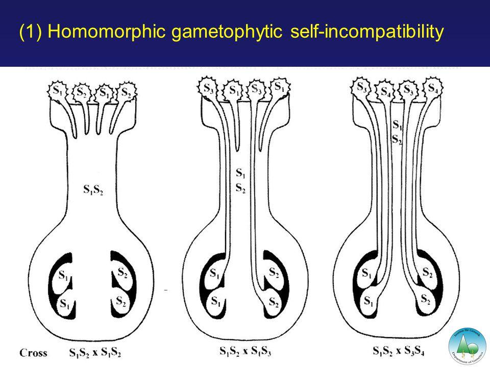 (1) Homomorphic gametophytic self-incompatibility Training Workshop on Forest Biodiversity, June 2006, Kuala Lumpur, Malaysia
