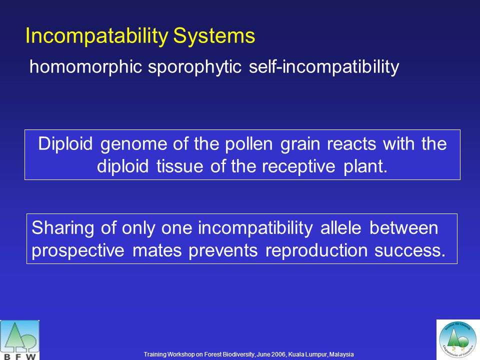 Incompatability Systems homomorphic sporophytic self-incompatibility Diploid genome of the pollen grain reacts with the diploid tissue of the receptive plant.